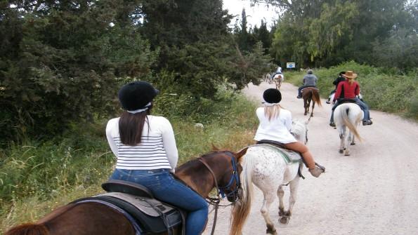 טיול סוסים בצפון