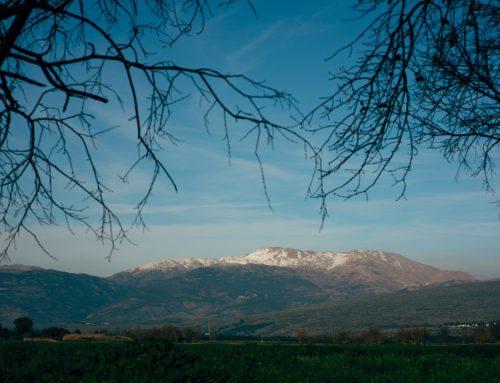 olive in רשת אירוח כפרי – נופש אונליין